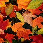 Fall into Better Health