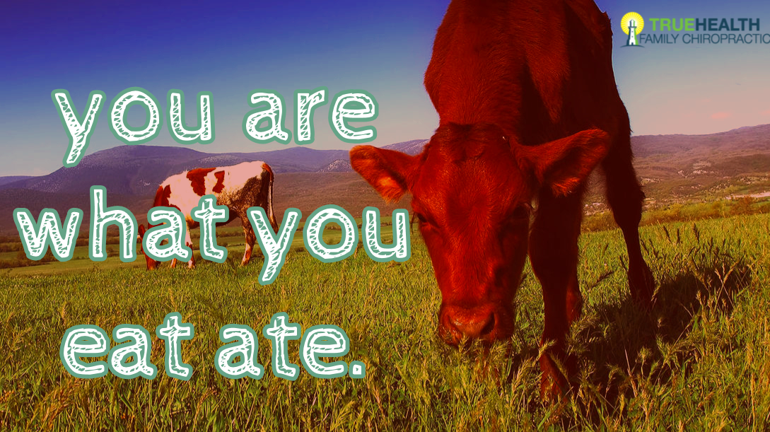 You Are What You Eat Ate
