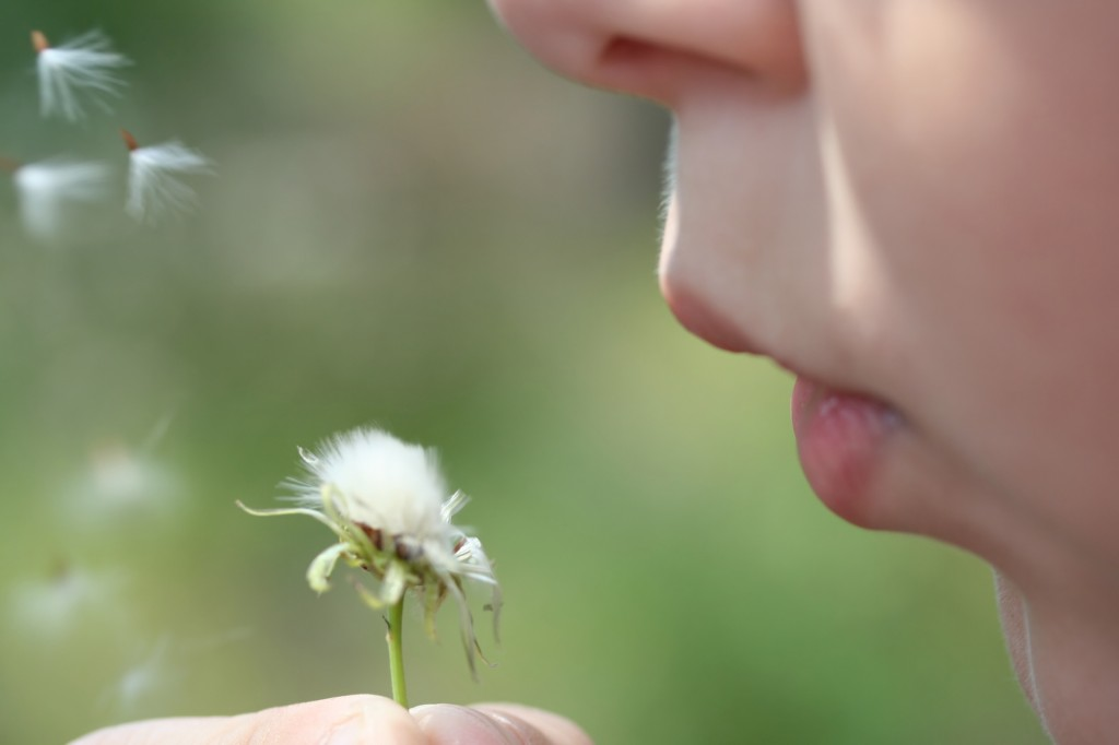 Asthma natural treatment with herbs, vitamins, and ...
